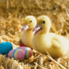 Ducklings, Easter eggs
